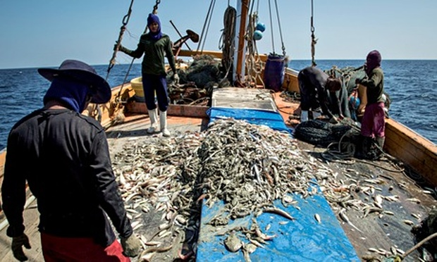 Thai government in extensive campaign to save Thailand's fisheries and seafood exports