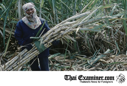 Thai Government switches sugar to ethanol production as prices plunge