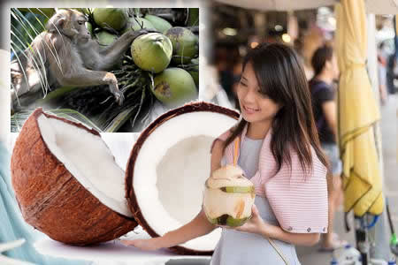 thailand-coconut-products-thai-farmers-monkeys