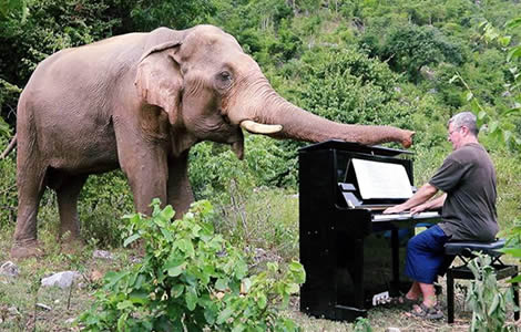 thailand-elephants-uk-pianist-paul-piano-music-elephant-sanctuary-kachanaburi-province