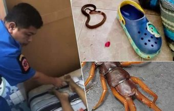Thai woman may have succumbed to a bite delivered by giant centipede as doctors perform an autopsy