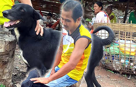 Ping Pong the 6 year old dog who saved a Thai baby buried alive last week is a media sensation