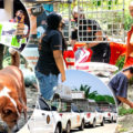 Dogs and cats mission in Phuket as 11 tonnes of feed moved in showing the best of human spirit at this time