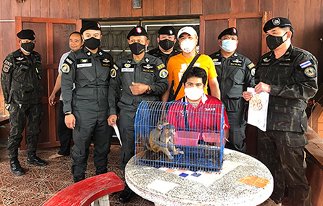man-arrested-for-selling-macaque-monkeys-chiang-mai